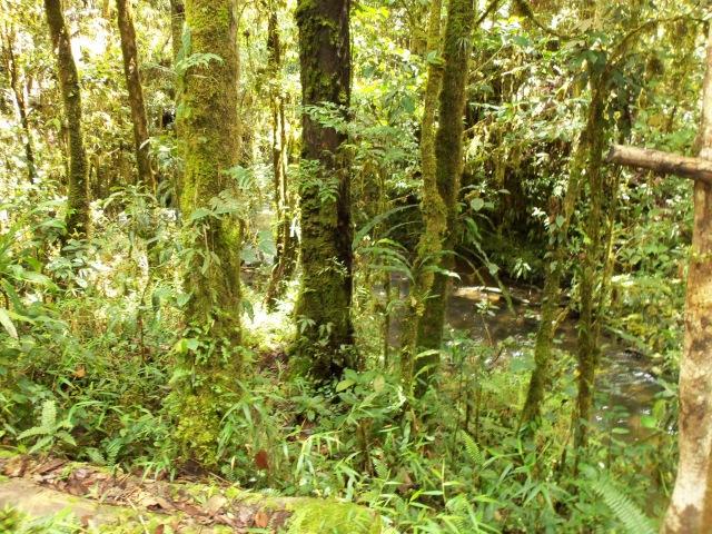 2 First Ambua walk (11)