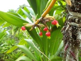 Rondon Ridge orchid garden (11)